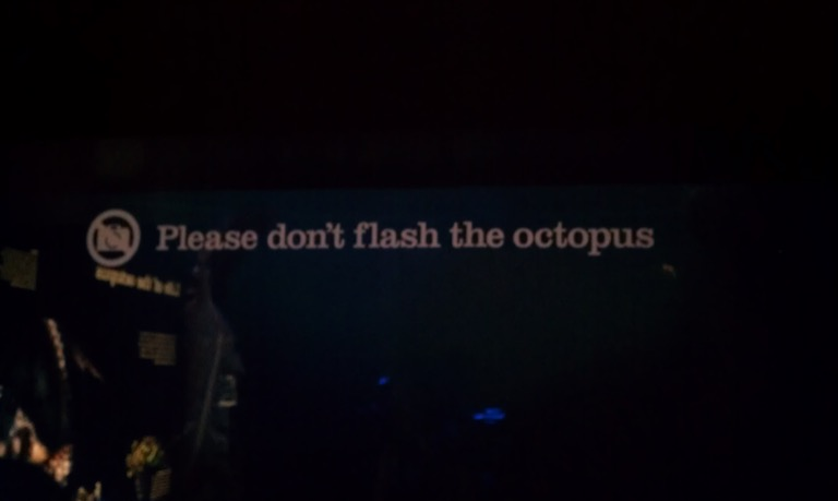 Please don't flash the octopus.