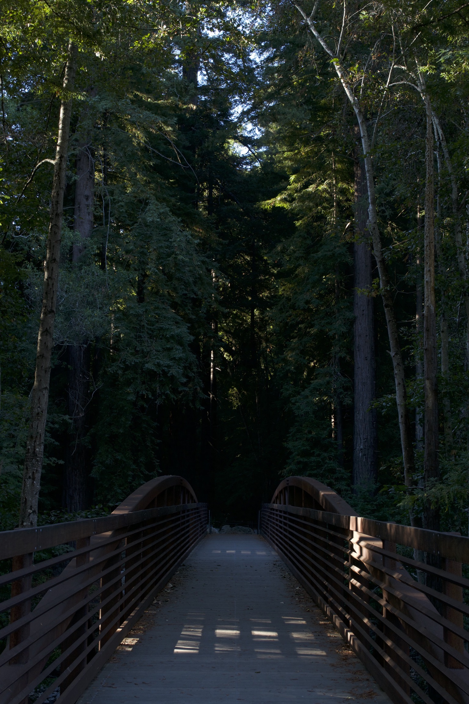 A footbridge leads into a dark forest.