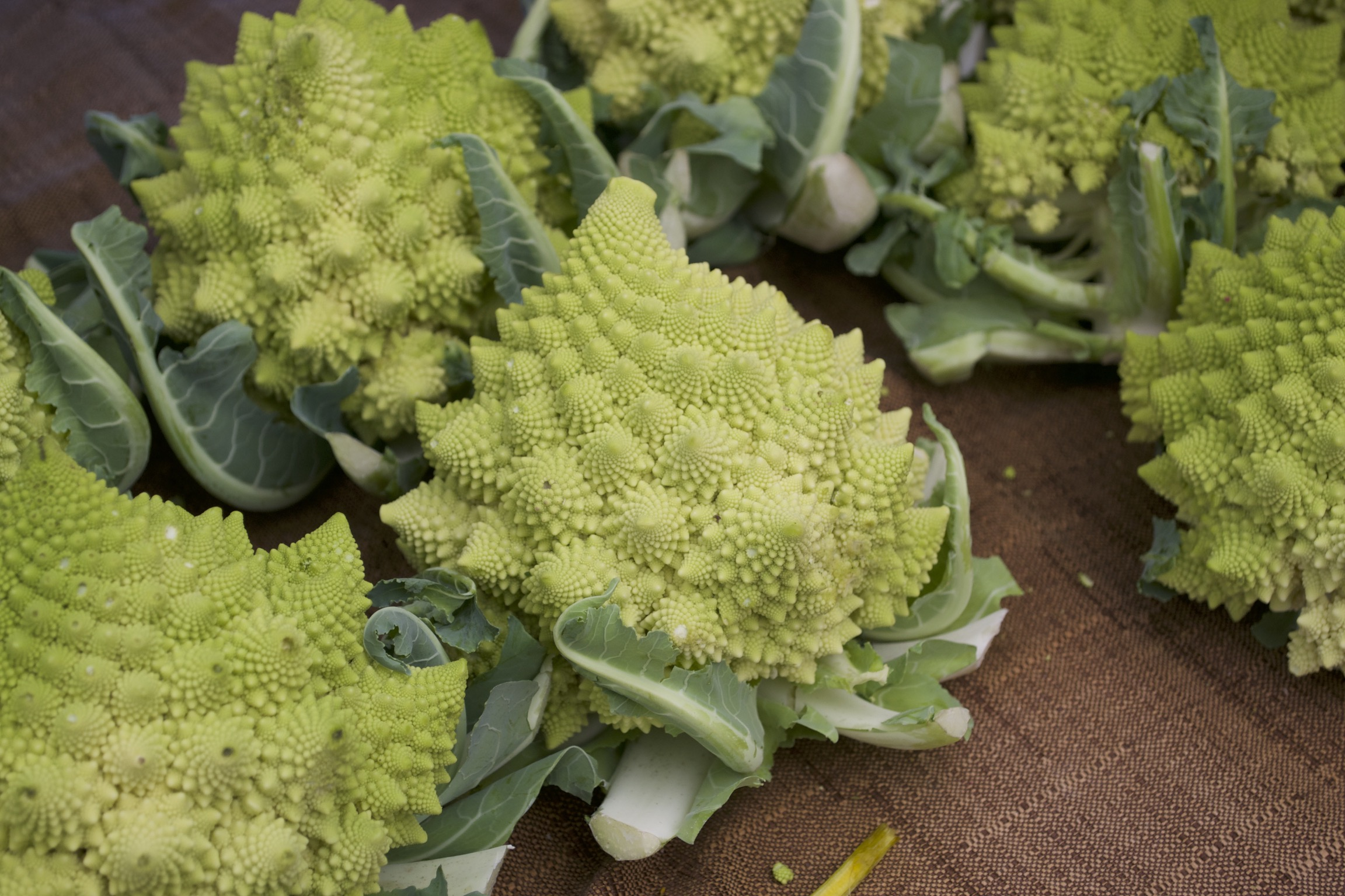 Light green fractal broccoli.