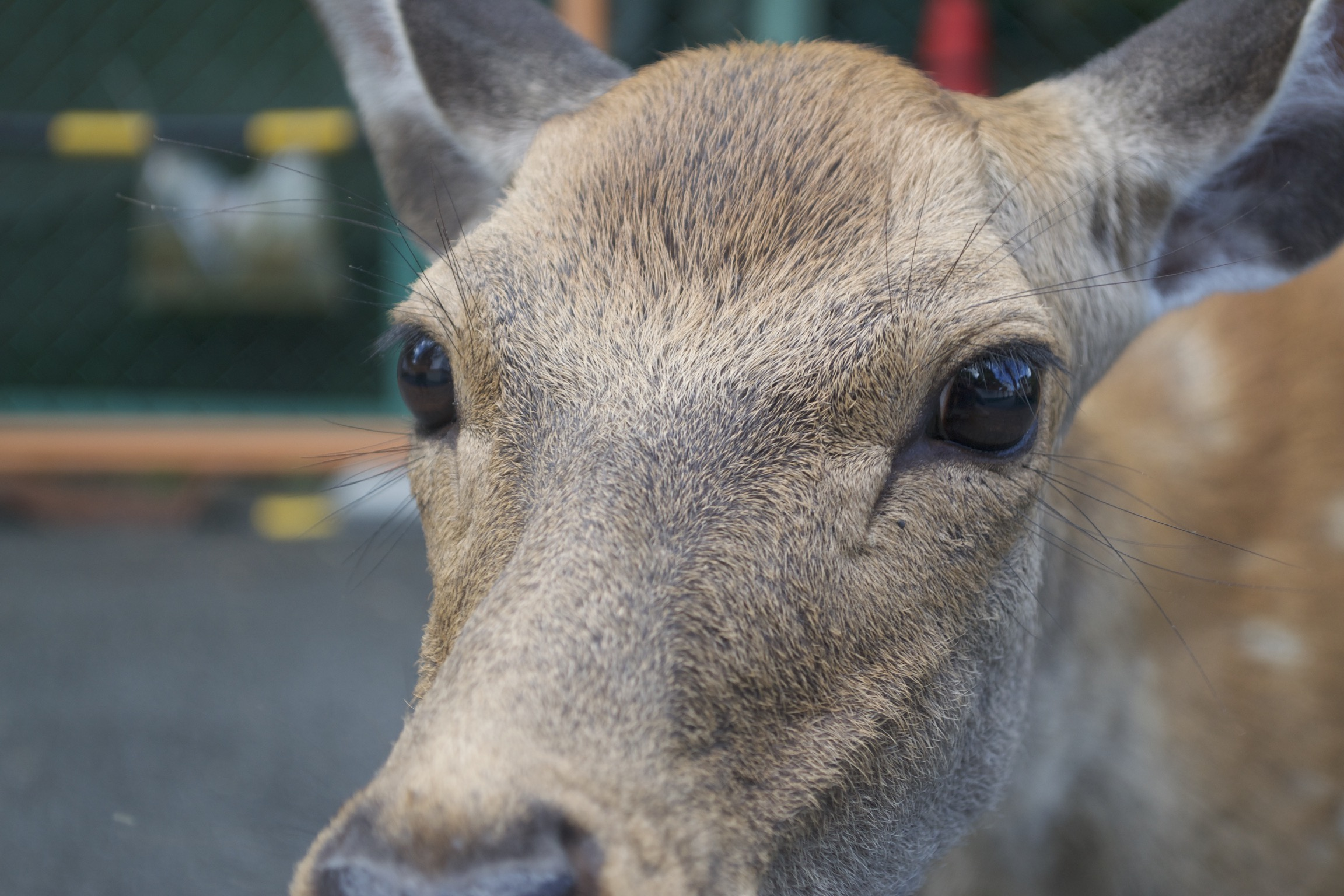 A close-up of a deer's snout and face