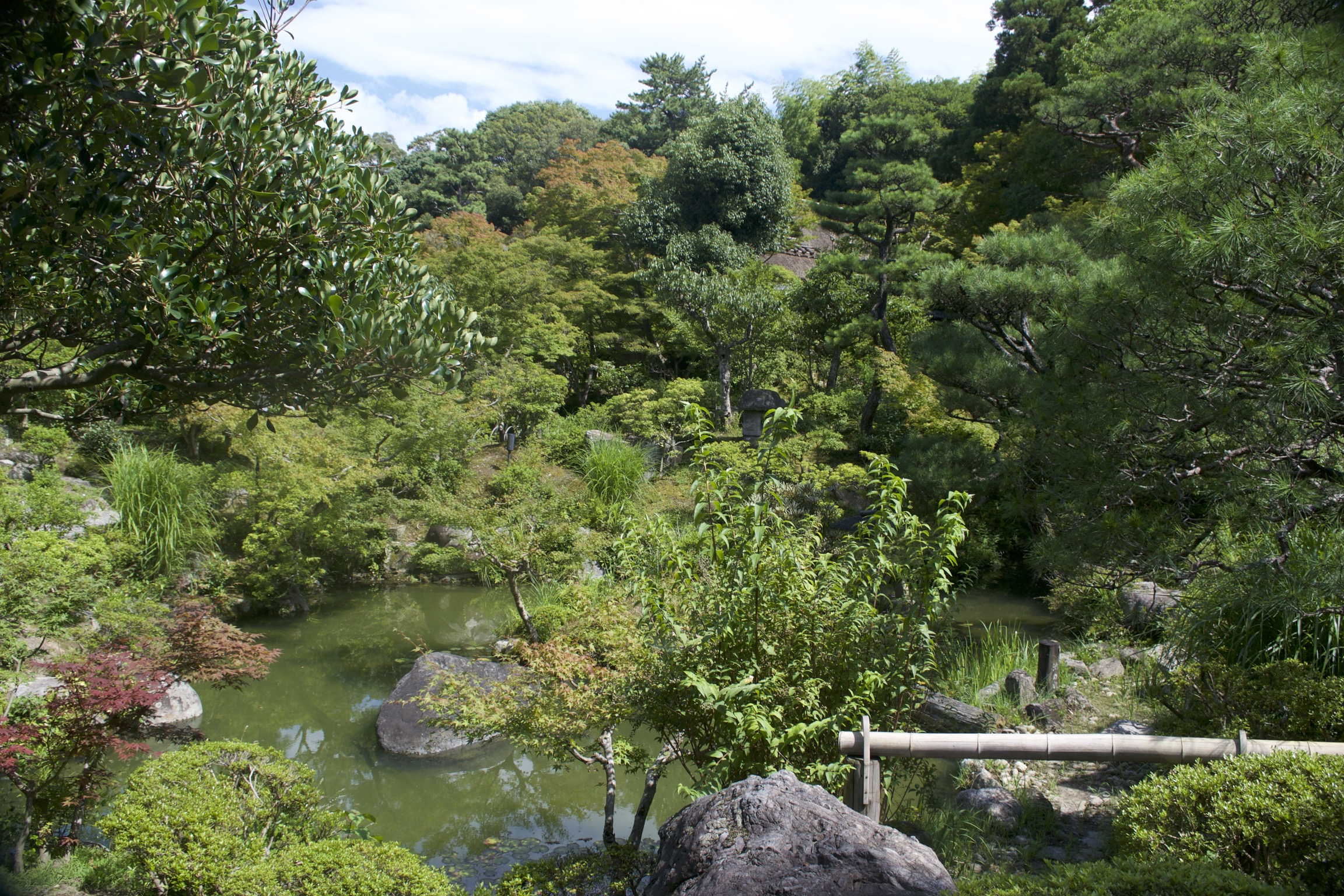 A small pond sits surrounded on all sides by lush greenery.